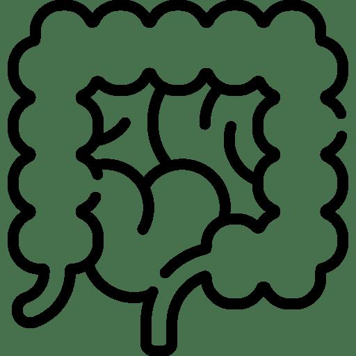 013 large intestine